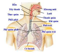 Phòng bệnh viêm đường hô hấp ở trẻ em - 1