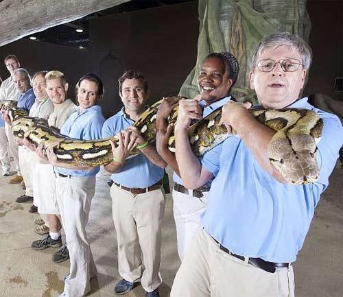 Chú rắn dài nhất thế giới qua đời - 5