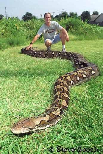 Chú rắn dài nhất thế giới qua đời - 3