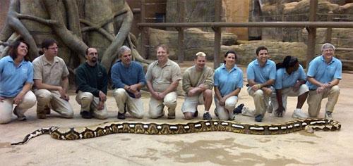 Chú rắn dài nhất thế giới qua đời - 2