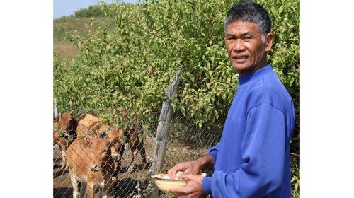 Thành triệu phú nhờ kiểu nuôi bò lạ - 1