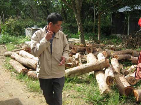 Kon Tum: Lâm tặc băm nát rừng gỗ trắc - 2