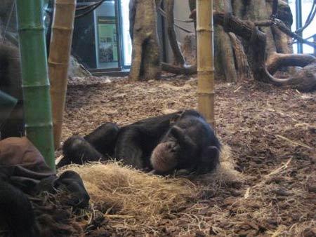 Những loài động vật có kiểu ngủ dễ thương - 3