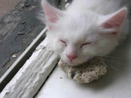 Những loài động vật có kiểu ngủ dễ thương - 4
