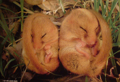 Những loài động vật có kiểu ngủ dễ thương - 8