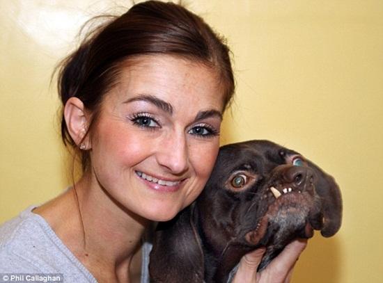 Chú chó xấu nhất nước Anh - 2