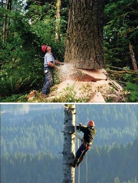 Những nghề nguy hiểm nhất thế giới - 7