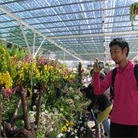 Kỷ lục Việt Nam: Nơi trồng nhiều hoa nhất