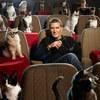 Chuyện lạ có thật: Mèo đeo kính xem phim 3D