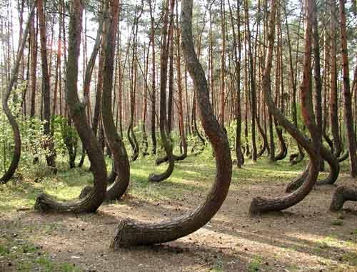 Khu rừng bí ẩn với những thân cây lạ - 1