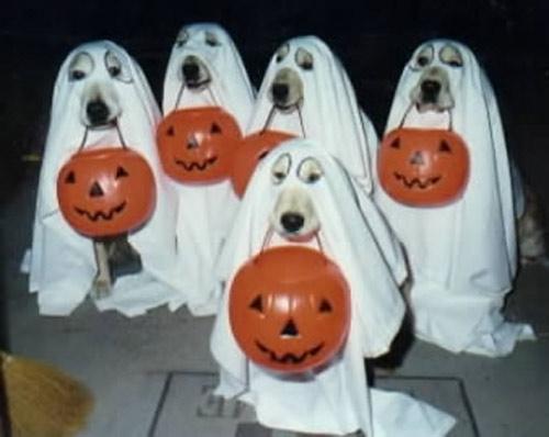 Những hình ảnh Halloween 2012 - 8