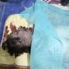 """""""Gaddafi thà chết ở Libya còn hơn ra tòa"""""""