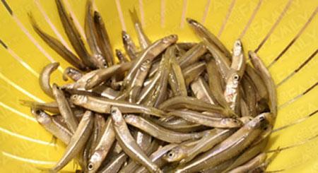 Cá cơm kho cay ngon miệng - 2
