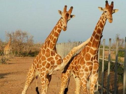 Tình bạn trong thế giới động vật - 1