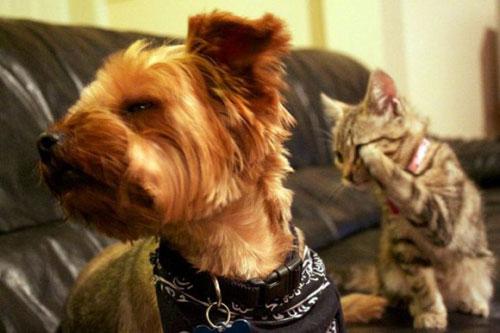 Tình bạn trong thế giới động vật - 2