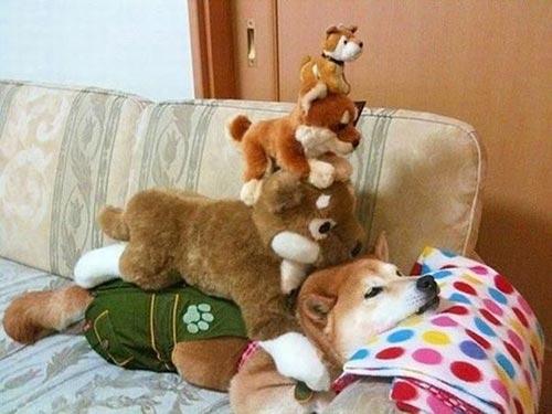 Tình bạn trong thế giới động vật - 4