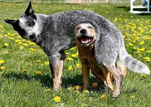 Tình bạn trong thế giới động vật - 3