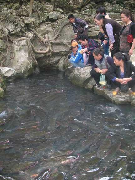 Suối cá thần và thực hư âm binh thần Rắn - 1
