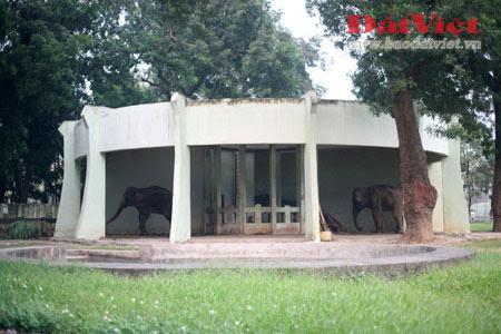 Đau xót nhìn voi Thủ Lệ gầy trơ xương - 1