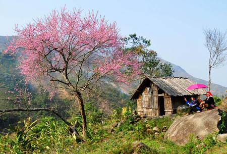 Lào Cai - Mùa nào cũng đẹp - 1