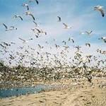 Du lịch - Top 10 bãi biển 'ghê sợ' nhất thế giới