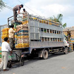 Xuất nhập khẩu - Hàng tấn gà thải Hàn Quốc đổ về TP. HCM