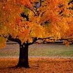 Du lịch - 10 'thiên đường' mùa thu không thể bỏ qua