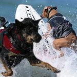 Phi thường - kỳ quặc - Khó tin những chú chó lướt sóng