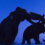 """Tin tức trong ngày - Xác ướp voi ma mút còn nguyên """"cậu nhỏ"""""""