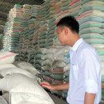 Thị trường - Tiêu dùng - Xuất khẩu gạo: Lượng tăng, giá trị giảm