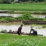 Tài chính - Bất động sản - Bi kịch nông dân bán hết đất ruộng