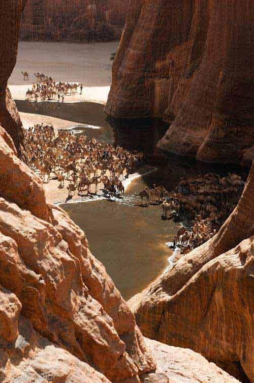 'Khu vườn bí mật' giữa lòng sa mạc Sahara - 9