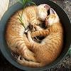 Những chú mèo ngủ siêu hài!