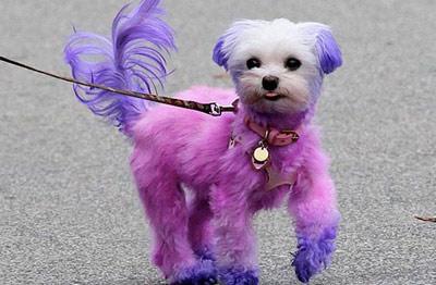 Ngắm cún cưng dễ thương của các siêu mẫu - 8