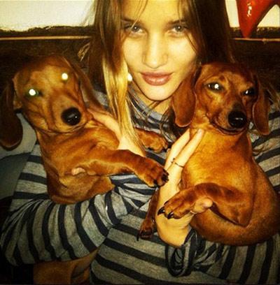 Ngắm cún cưng dễ thương của các siêu mẫu - 9