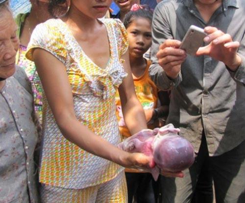 Heo giống trẻ sơ sinh ở Bình Phước - 2