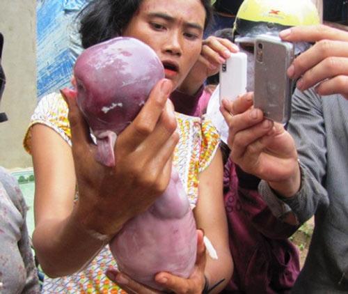 Heo giống trẻ sơ sinh ở Bình Phước - 3