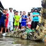 Hoảng hồn đụng... cá sấu trong đêm