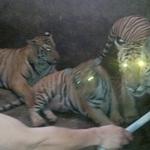 Tin tức trong ngày - Sửng sốt điểm nuôi nhốt hổ như nuôi lợn