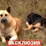 Tin tức trong ngày - Clip xúc động: Chó canh xác bạn suốt một tuần