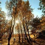 Du lịch - Vẻ đẹp hoang sơ của mùa thu nước Anh