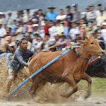 Du lịch - Sôi động lễ hội đua bò Indonesia