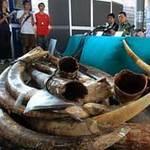 Tin tức trong ngày - Hồng Kông: Thu 3,6 tấn ngà voi giá 70 tỷ đồng