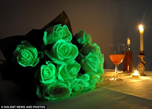Bó hoa phát sáng trong bóng tối - 2