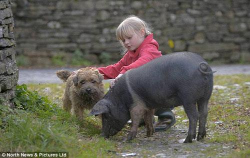 Tình yêu lãng mạn của chó và lợn - 1