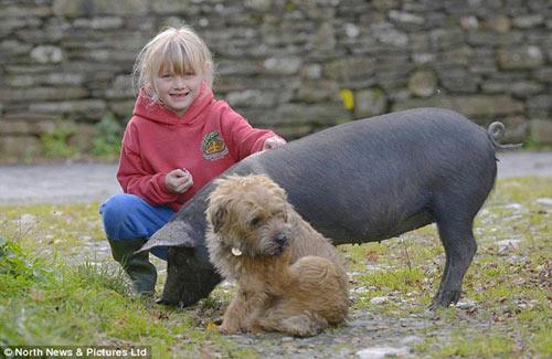 Tình yêu lãng mạn của chó và lợn - 2