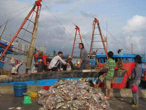 TQ thu mua cá cơm, dân làm mắm điêu đứng - 1