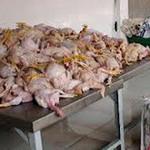 Thị trường - Tiêu dùng - Đưa gần 1 tấn gà thối đi tiêu thụ
