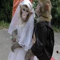 Video clip cười: Sự hờn dỗi của cô dâu!