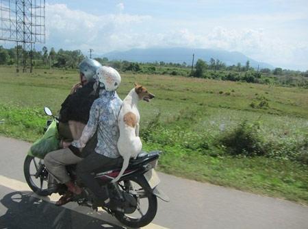 Những hình ảnh chỉ có ở Việt Nam (131) - 2